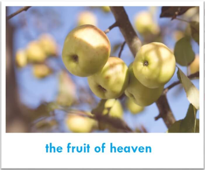 The Fruit of Heaven